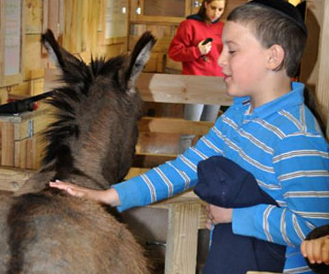 Children's petting zoo at the Heritage Passover Day Camp