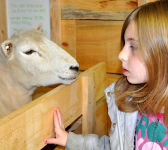 Up close and personal with our petting zoo animals at the Heritage Resort & Spa